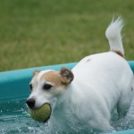 Jack having pool time