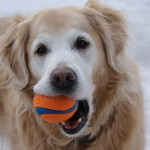 Keeva and her ball
