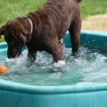 Macel playing ball in the pool