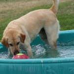 Abby playing in the pool