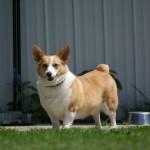 Ruby standing watch