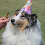 Pepper's Birthday