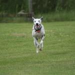 Tzarina running