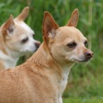 Logan and Dixie at Matthews Kennels