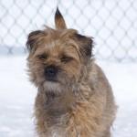 Chillin outside Border Terrier