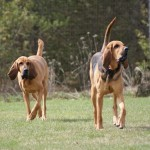 Ruby and Brutus at Matthews Kennels