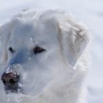 Sweet Keisha enjoying the snow