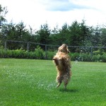 Hose play time time at Matthews Kennels