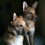 Sierra & Cody