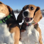 Lucy and Abby playing at Matthews Kennels