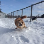 Toby & Filou running at Matthews Kennels