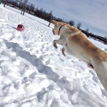 Ozzy playing at Matthews Kennels